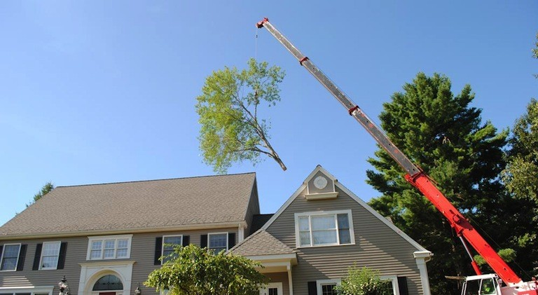 Tree Removal Worcester MA