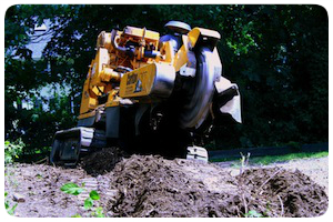 Tree Stump Removal Service Holden MA