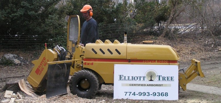 Stump Grinding and Removal Worcester MA