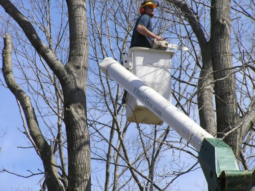Tree Service Worcester MA